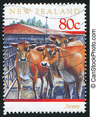 cattle Jersey cow - NEW ZEALAND - CIRCA 1997: stamp printed...