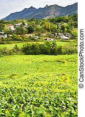 Philippines mountain village and tobacco field. Luzon Island...