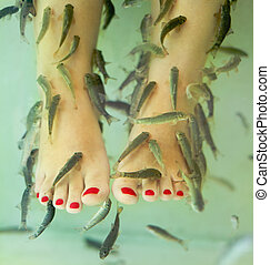 peixe, spa, pedicure