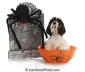 halloween puppy - cocker spaniel puppy sitting in bowl with...