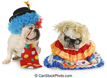 funny clowns - dog clowns - male and female english bulldog...