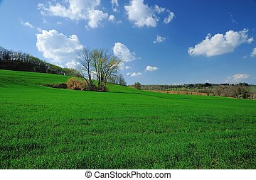 Greenfield under a blue sky