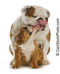牛頭犬, 父親, 兒子