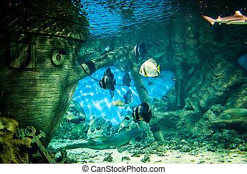 oceanarium - Fishes in Oceanarium