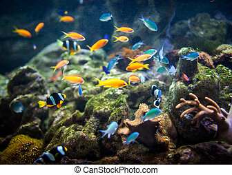 Coral reef and fishes. - fishes in an aquarium ...