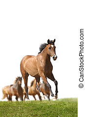 horse running with herd