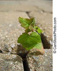 Perseverance - A plant growing through the crack of a paved...