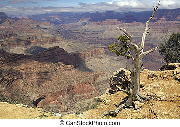 Grand Canyon Grandeur - a stunning vista of the grandeur of...
