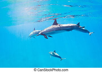 dolphins swimming underwater