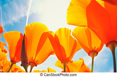 spring flowers - Beautiful spring flowers