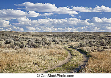 sagebrush high desert in Wyoming - dirt road in sagebrush...