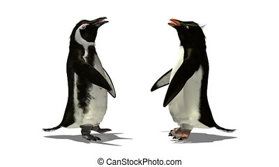 penguin - image of penguin