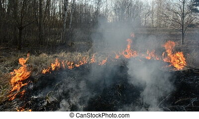 dry spring grass danger burning near forest