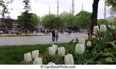 blue mosque with tullips