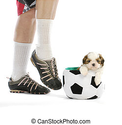 sports hound - cute puppy sitting in soccer ball with soccer...
