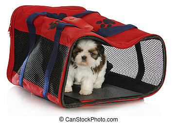 puppy carrier - shih tzu puppy in a pet carrier on white...
