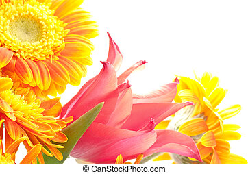 Close up of tulip and daisy - Close up of one red tulip and...
