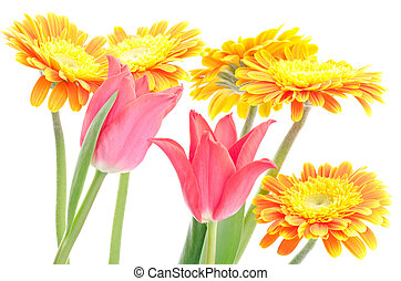 Tulip and african daisy - Two red tulips around the orange...