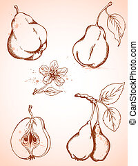 vintage pears - Set of vector hand drawn vintage pears