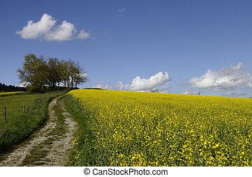 amarillo, campo, Colza, flor, tractor, pistas, debajo, azul,...
