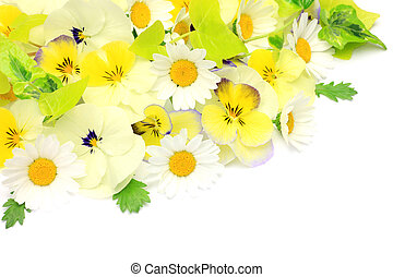 spring flower - I take pansy and north pole in a white...