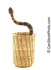 Dancing snake - Snake in basket isolated on a white...