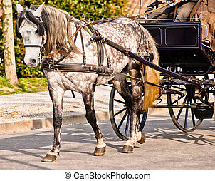 Horse drawn carriage in Lucca. Italy