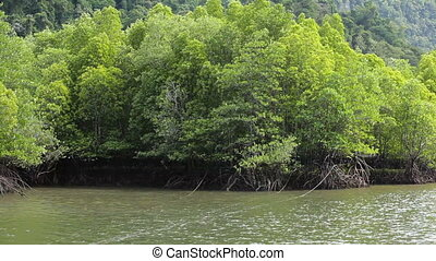 mangrove forest - Camera pan on beautiful mangrove forest,...