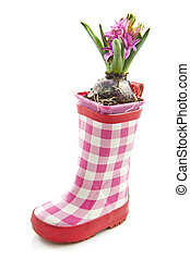 Little pink hyacinth - Pink hyacinth in rain boot over white