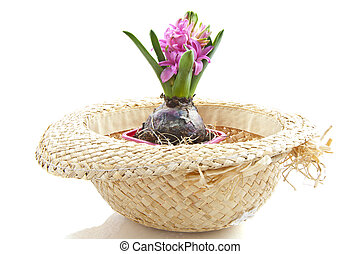 Little pink hyacinth in a straw hat over white