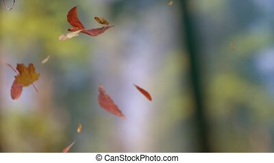 Falling leaves - 3D loop-able animation of falling leaves