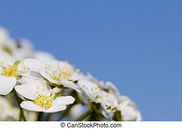 Flowers in front of a blue sky
