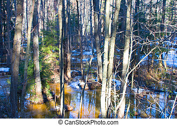wood spring rays 2 - the wood in the early spring in a sunny...