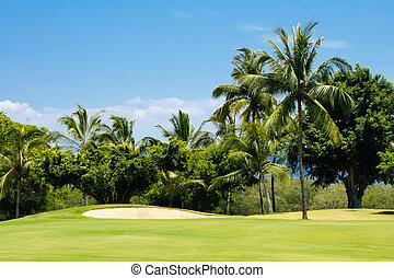 Golf Course - Golf course surrounded by palm trees in Puerto...