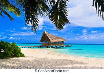 buceo, Club, tropical, isla