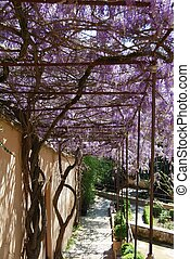 Wisteria covered pathway, Spain. - Wisteria covered...