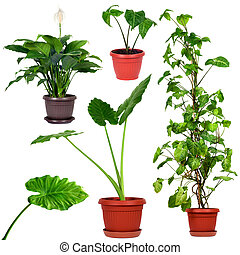 Collection of different house plants - Set of different...