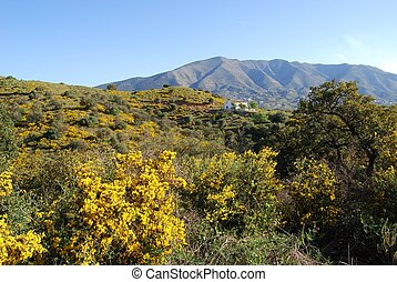 Andalusian countryside, Mijas. - Country farm in the...