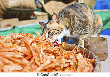 Cat eating fishes in fishing village