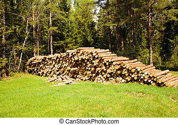 cut-down trees - the cut-down and piled trees. summertime of...