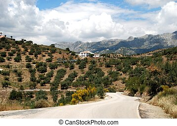 Olive groves, Axarquia Region - Olive groves and mountains,...