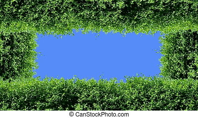 Green frame - Animation of green hedge elements