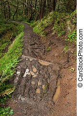 muddy eroded trail, Oregon