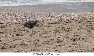 A small dog on a sandy beach