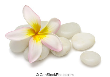 Frangipani and Pebbles - Pink Frangipani bloom with granite...