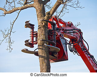 tree cutting crane about to cut a tree