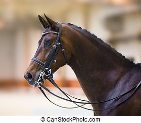 horse head isolated in defocused