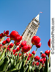 Spring Politics - Low view of the Parliament Centre Block...