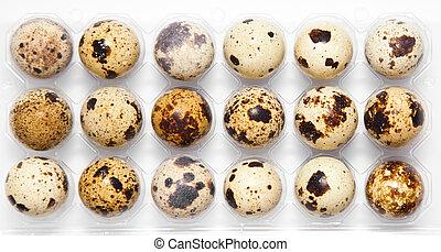 quail eggs in their plastic packaging