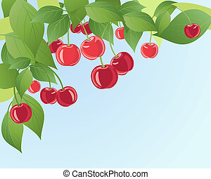 cherries - an illustration of ripe red juicy cherries on a...
